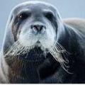 кроссворды фото к слову морской